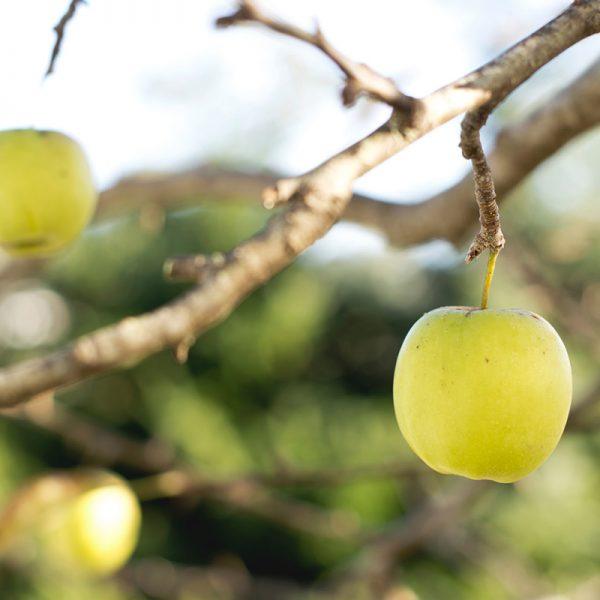 Manzanas amarillas (Supertomate - Tienda online)