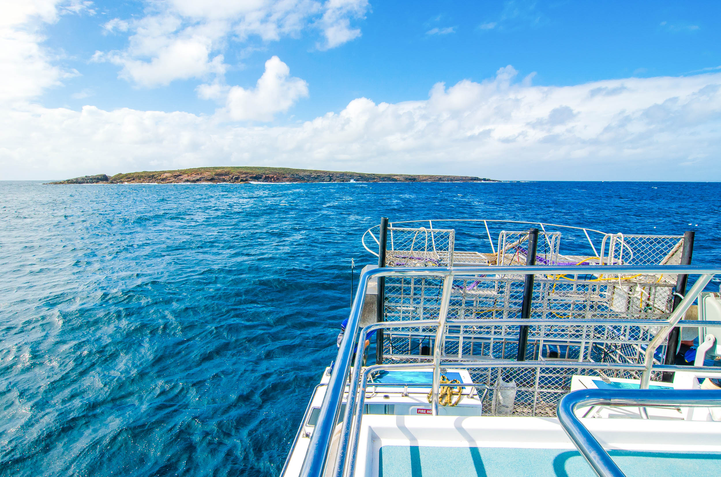 calypso star charters shark cage diving port lincoln