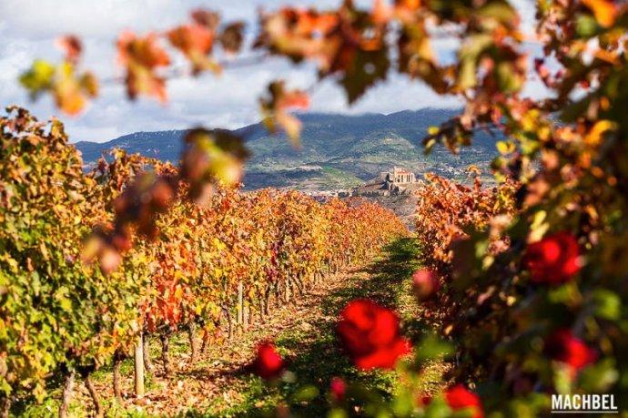 Viñedos en Otoño en La Rioja by Machbel: Foto de Víctor Gómez (Flickr)