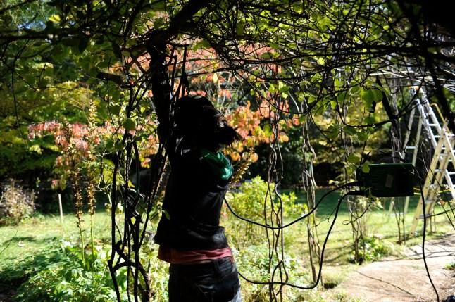 pergola metal vegetal supervolum 2014 (19)