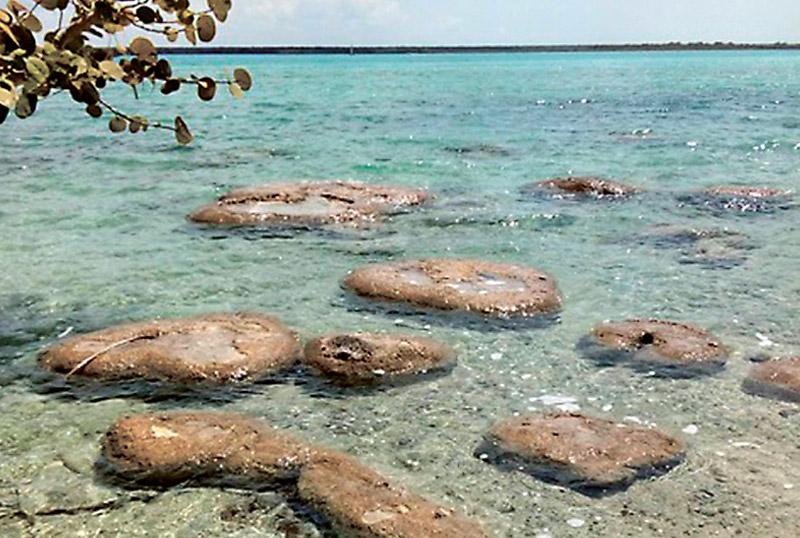 Alerta estudio de la UNAM sobre daños en Laguna de Bacalar