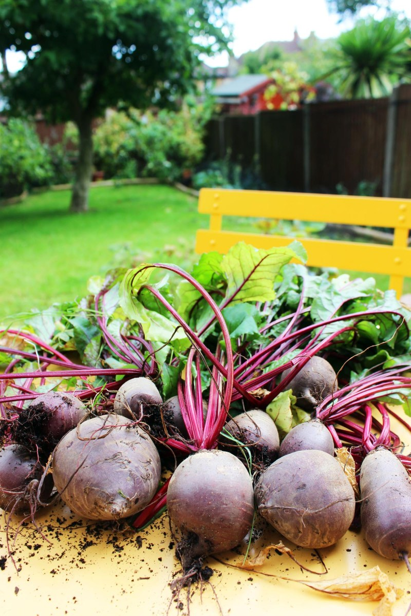 We've had a lot of success growing beetroot - find out about all of our successes and failure in growing a kitchen garden at Supper in the Suburbs!