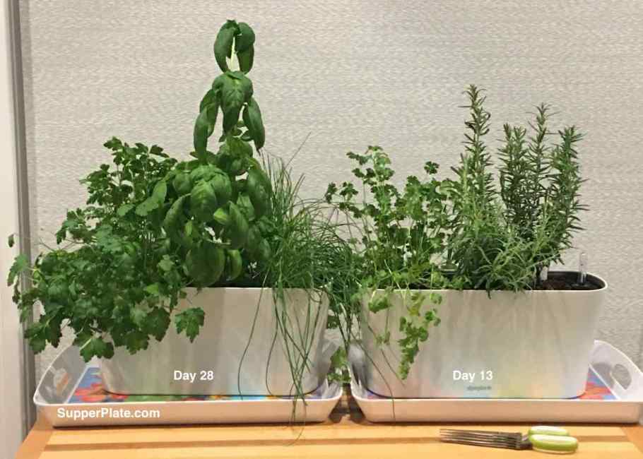 Aquaphoric Herb Garden Review with two herb planters filled with herbs