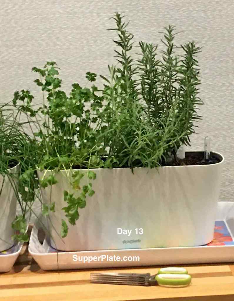 Aquaphoric Herb Garden Review   with Herbs in a planter at day 13