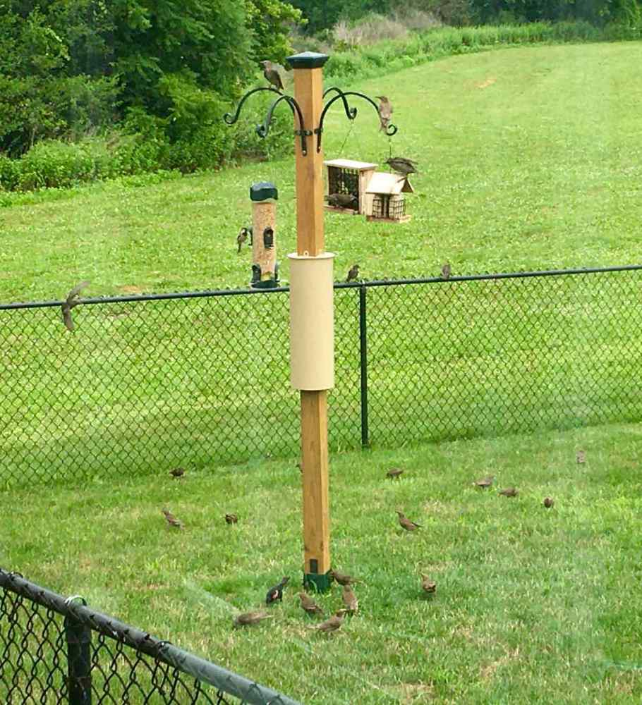 Birds on three feeders in the yard