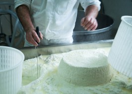 ricotta farm and cooking-1064