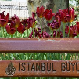 Istanbul drives me food crazy-2641