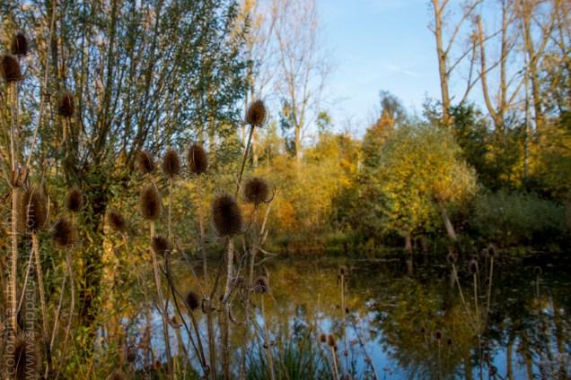 colours of autumn web-9885762