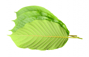 Maeng Da Kratom Reviews