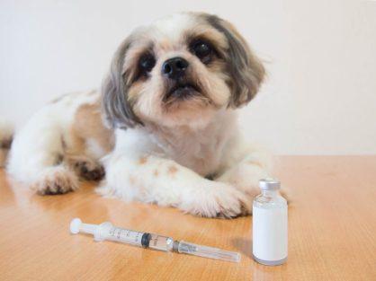 dog and diabetics