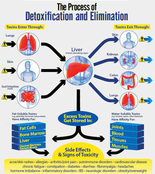 Liver Detox Review Complete Guide To Detoxing Your Liver