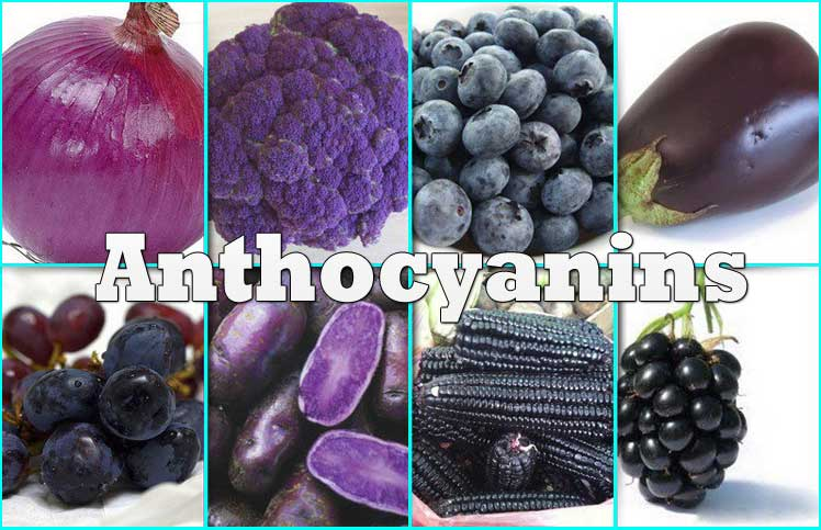 Anthocyanins Review Benefits Amp Sources Of Anthocyanins