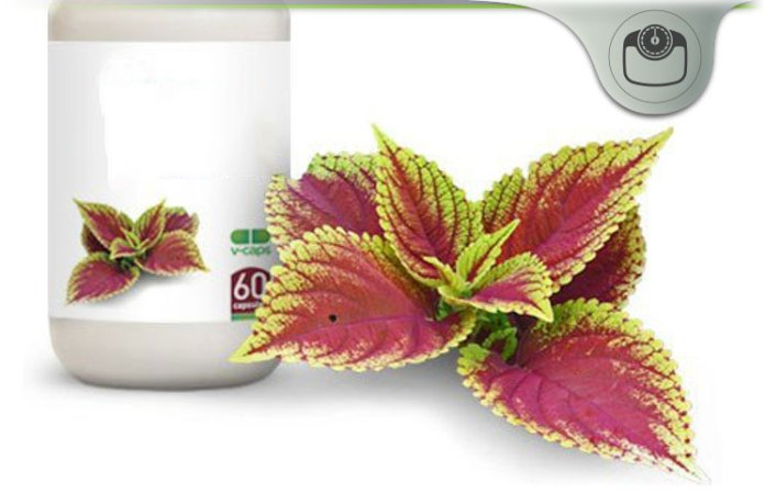 best pure forskolin extract