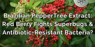 brazilian peppertree