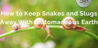 diatomaceous-earth-snakes-slugs-defense