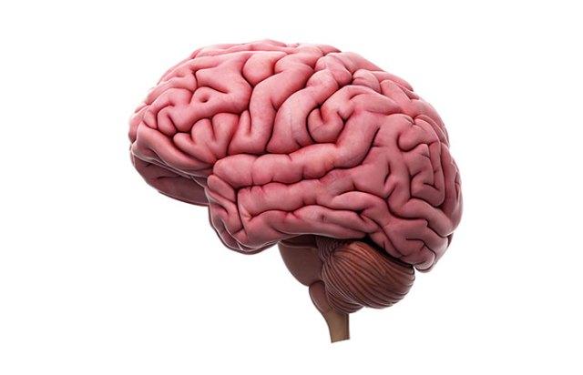 mind milq cognitive rush review - quality nootropic brain enhancer?, Muscles