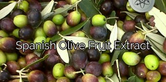 Spanish Olive Fruit Extract