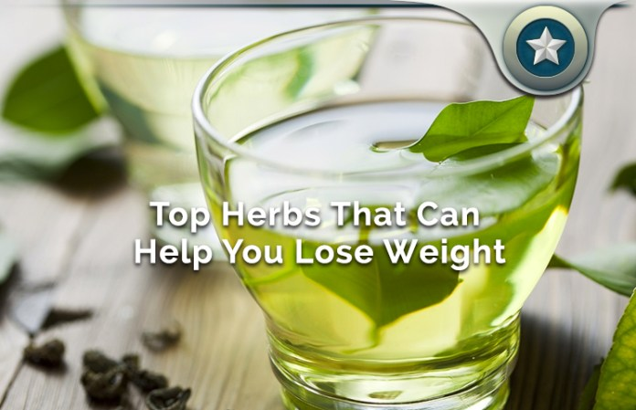 Top Herbs That Can Help You Lose Weight & Burn Fat Fast Naturally