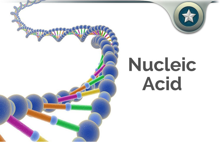 Nucleic Acid Review Rna Amp Dna Supplement Health Benefits