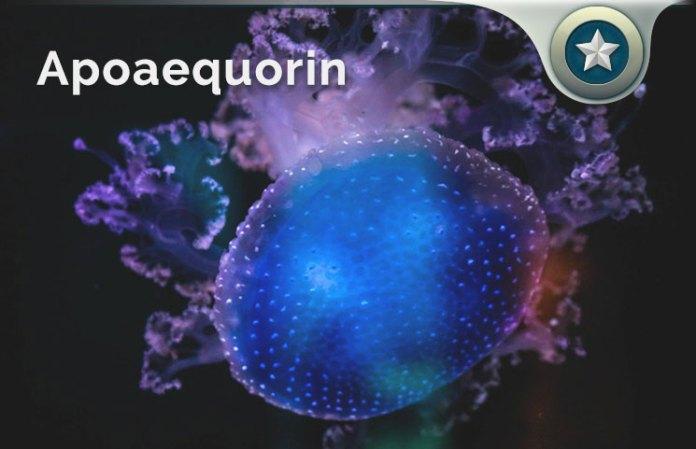 Apoaequorin
