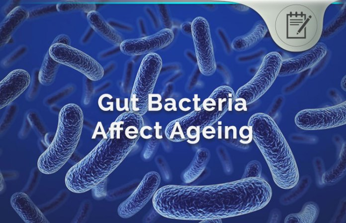 Gut Bacteria Affects Ageing