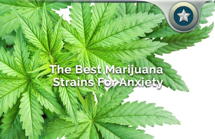 Best Marijuana Strains For Anxiety Guide: Can Cannabis Help?