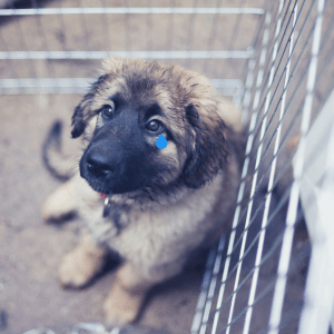 A puppy on the ground in a cage with a fake tearing rolling down its poor puppy face.