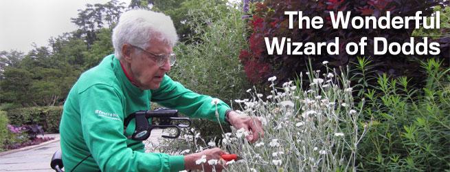 Wizard of Dodds