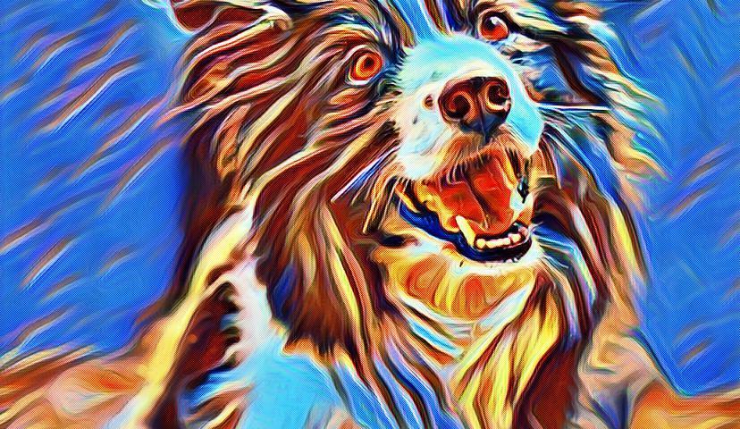 splash dog art