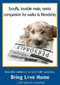 Bring Love Home - scruffy dog200.jpg