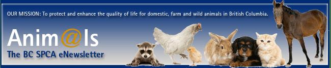 Anim@ls - The BC SPCA eNewsletter