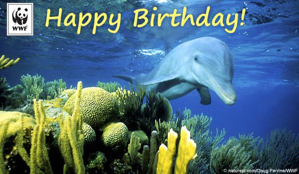 Birthday Ecards From WWF Free Birthday Ecards World