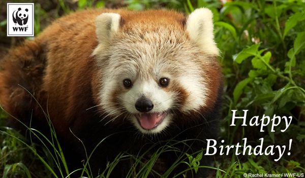 Free Cards Animated Facebook Birthday