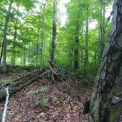 ad-trail-31