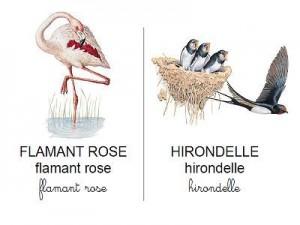 Vocabulaire-oiseaux-et-rapaces-300x225