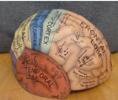 chapeau de cerveau hemispheres gauche et droit