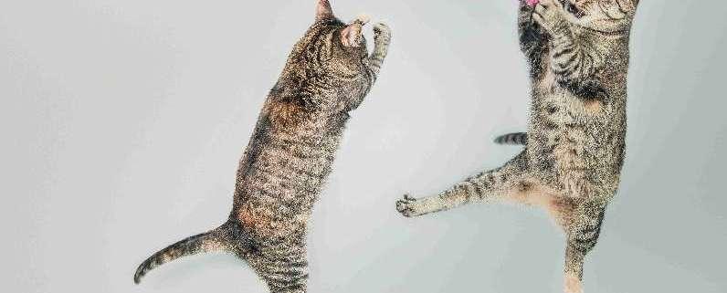 cat on web