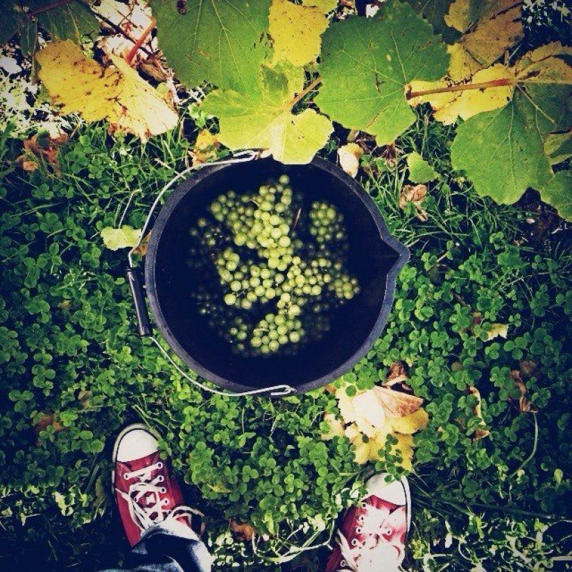 Today, we all went picking grapes.