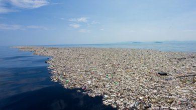 Plastivida participará com ações de educação ambiental no Lançamento do Plano Nacional de Combate ao Lixo no Mar 2