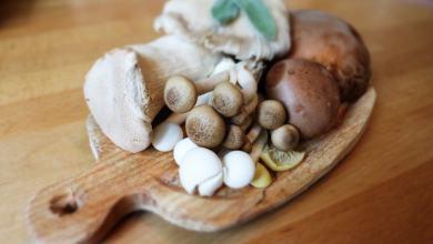 cogumelos medicinais em uma tábua
