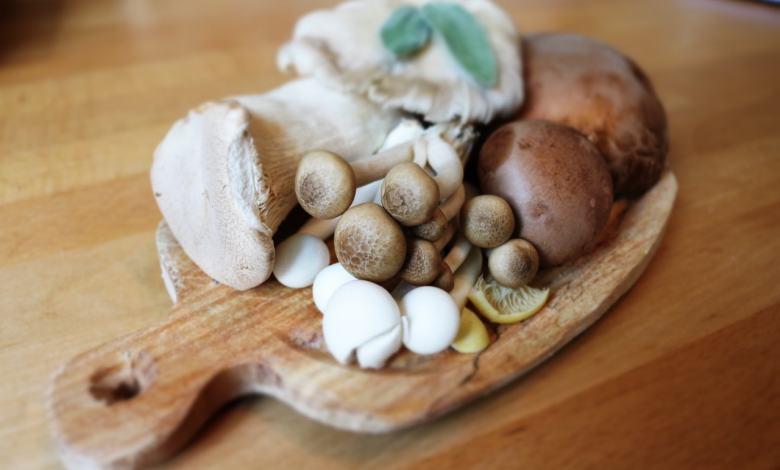 Photo of Cogumelos medicinais: 4 benefícios apoiados pela ciência