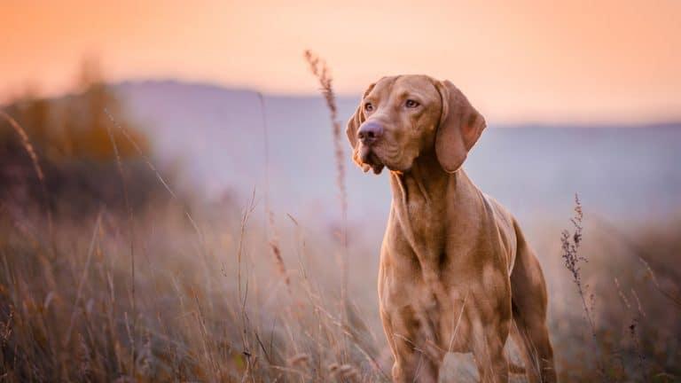 Tudo o que você precisa saber para ter e cuidar bem de um cachorro 1