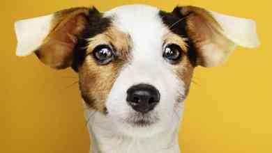 Foto de Otite em cães: causas, sintomas e tratamento