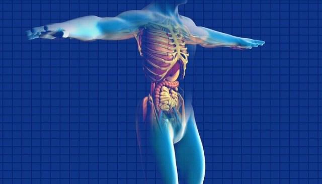 O segredo para uma vida com vitalidade está em remover essa obstrução tóxica do corpo