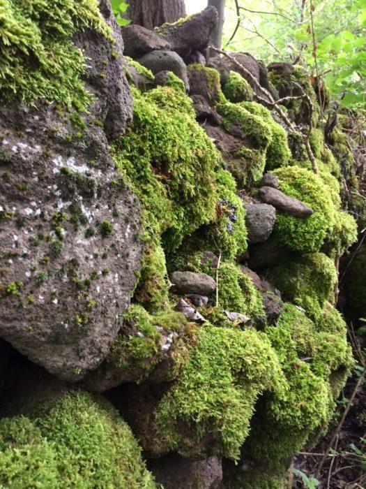 Mousse et granit