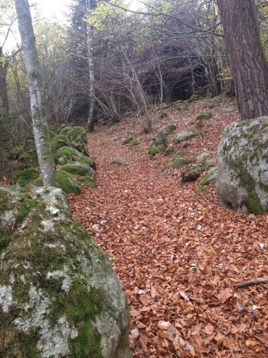 Saint Georges- Haute -Ville à Montarcher :19,8 km