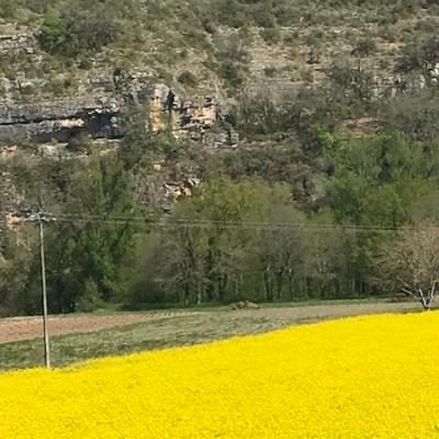 Champs de colza, falaises après Cajarc