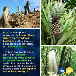 Investigacion de la UCR en la Zona Norte evidencia expansion pinera descontrolada