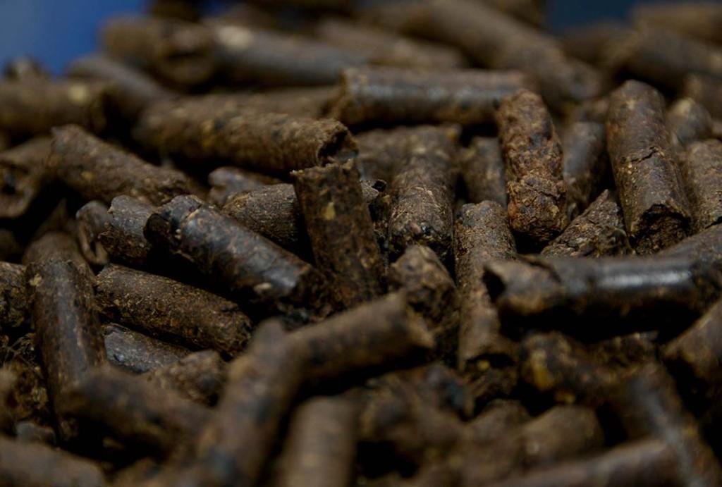Ingenieros Quimicos UCR logran procesar broza del cafe para producir electricidad3