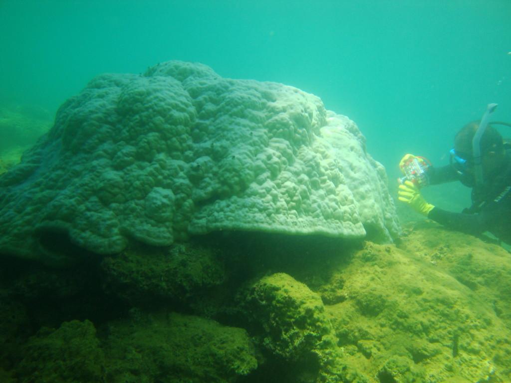 UCR Paramos bosques secos y arrecifes entre ecosistemas de interes para expertos en cambio climatico2
